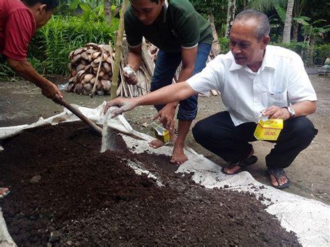 Bibit Bawang Merah Kapur kunci sukses pengelolaan gambut untuk tanaman kelapa sawit