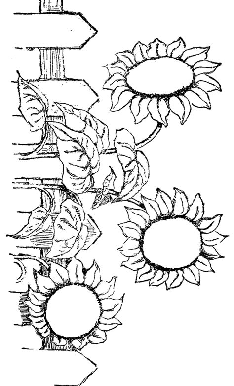 coloring pages of fall flowers 301 moved permanently