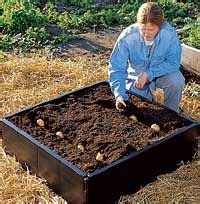harvest bushels of potatoes from the grow bed square foot