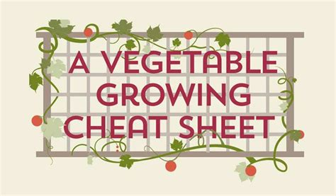 When To Plant Your Garden by A Vegetable Growing Guide Infographic Sheet