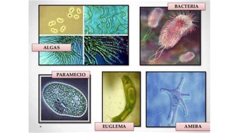 imagenes sensoriales de forma y tama o teor 237 a celular forma y tama 241 o delas c 233 lulas