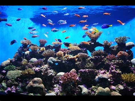 aquarium live wallpaper hd for android youtube the best 3d aquarium live wallpaper hd 3d aquarium game
