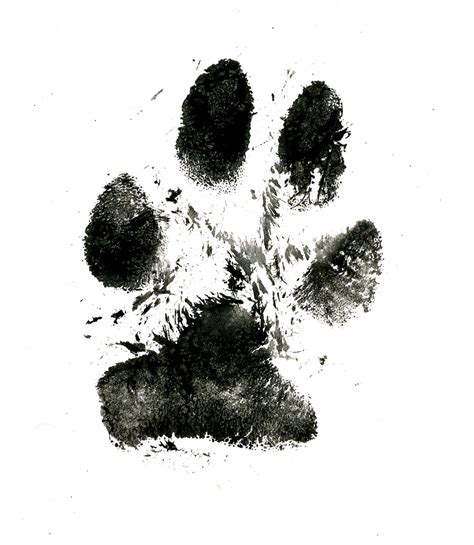 puppy prints best photos of real paw print paw print real paw print ink and
