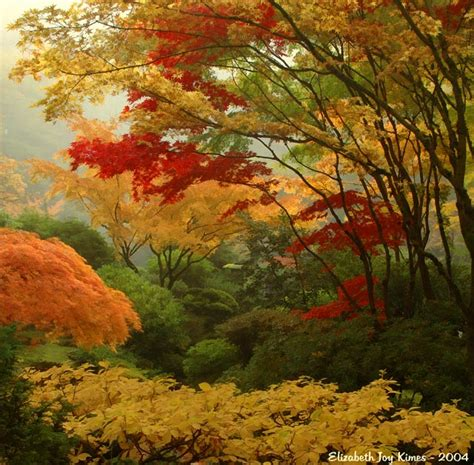 fall gardening image result for http www mataharicollectibles