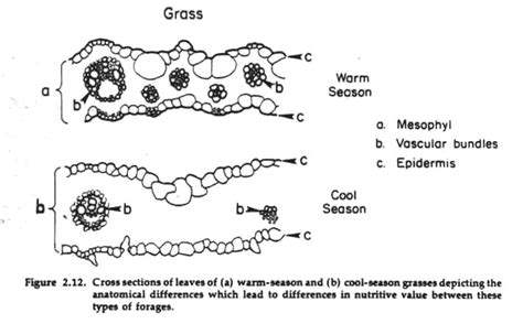 difference between monocot and dicot leaf cross section dicot leaf