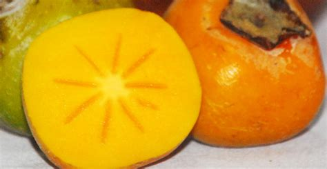 Bibit Buah Kesemek buah kesemek atasi perut kembung bebeja