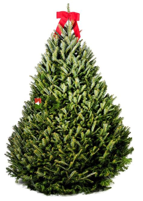 where to get best live tree prices 28 best solution for live trees ge 7 5 ft just cut blue scotch pine pre lit