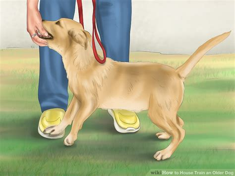 how to house train a older dog how to house train an older dog with pictures wikihow