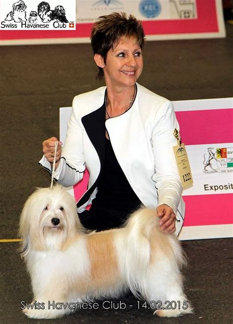 havanese club swiss havanese club expositions 2015
