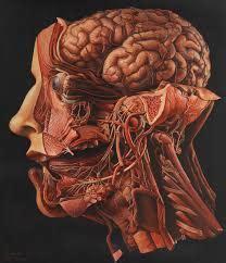 testa anatomia anatomia dei punti sensibili testa e collo ars defendendi