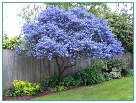 decorative trees decorative trees for landscaping weeping ornamental trees