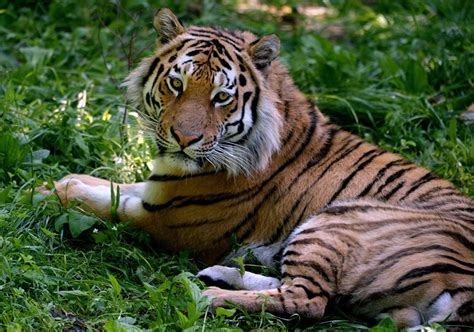 imagenes de animales raros en el mundo democracia la otra america en peligro de extinci 243 n los