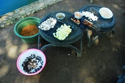 umpan pancing  ikan mas tips peternakan budidaya