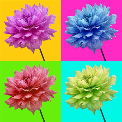 bright colored flowers bright colored dahlia flowers photograph by natalie kinnear