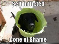 Cone Of Shame Meme - cone of shame image gallery know your meme