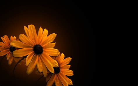 dark wallpaper with flowers flower full hd wallpaper and background image 1920x1200