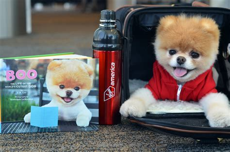 cutest pomeranian in the world how to turn your pet into a social media money