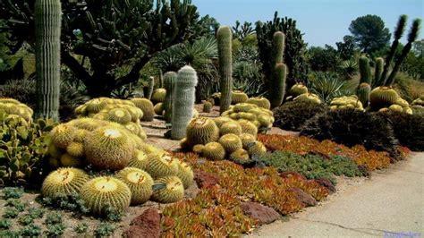 Cactus Garden Design Cactus Garden Landscape Ideas Cactus Cactus Garden Designs