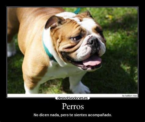 imagenes graciosas bulldog ingles perros desmotivaciones