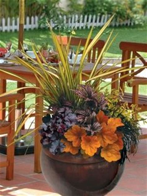 Garden Kaleidoscope Planter by 49 Best Images About Abelia Abelia Abelia On