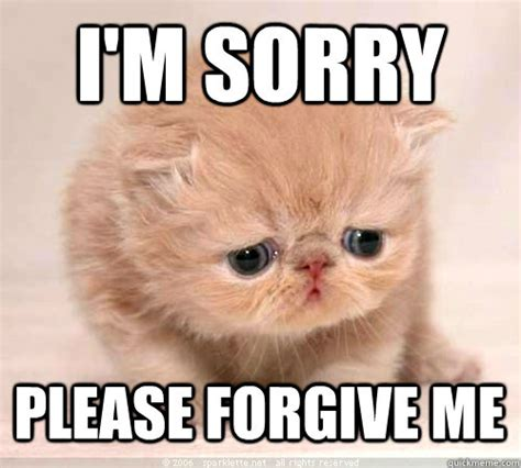 I Am Sorry Meme - sorry cat memes quickmeme