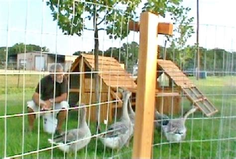 movable chicken fence on sale portable chicken fence posts claz org