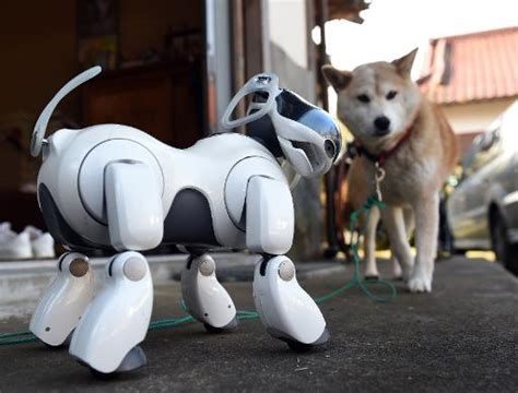 robot puppies in japan robot dogs are for and