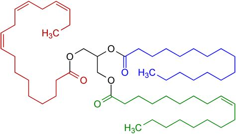 filetriglyceride structural formulae vpng wikimedia