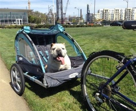 instep 2 seat stroller bicycle trailers stroller carrier child baby pet cargo