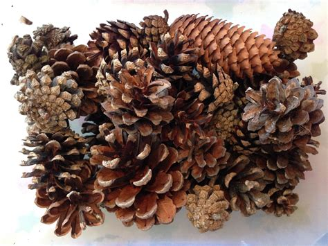 crafts with pine cones pine cone spider pinaddicts challenge