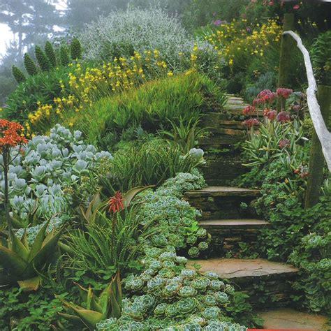 Garden Accents Hill Ca 634 Best Succulent Plants Sedums And Cactus Images On