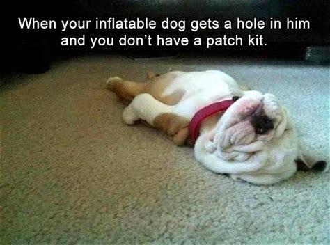 Pet Memes - 194 best pet memes images on pinterest funny animals