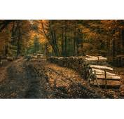 Landscape Nature Fall Forest Dirt Road Leaves Trees
