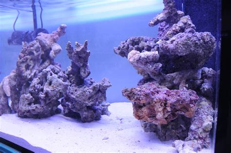 Reef Aquascaping Ideas by Aquascaping Show Your Skills Reef Central