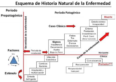 cadena epidemiologica historia natural dela enfermedad el m 233 dico pr 225 ctico estadios de la enfermedad
