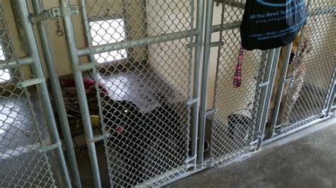 comfort kennels gallery comfort kennel pet care