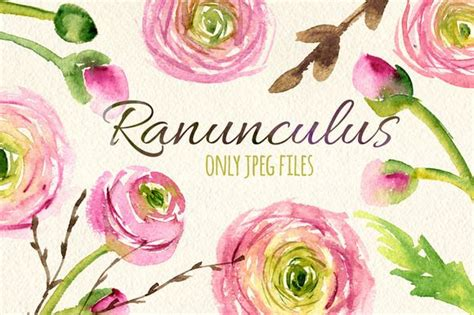 watercolor ranunculus tutorial 508 best water colors images on pinterest