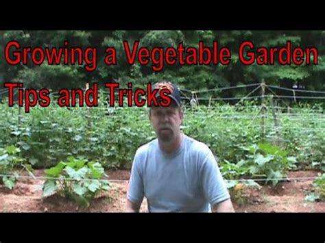 growing  vegetable garden update tips tricks june