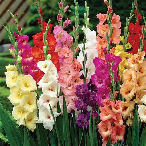 Container Vegetable Garden Ideas - gladiolus flower meaning savingourboys info