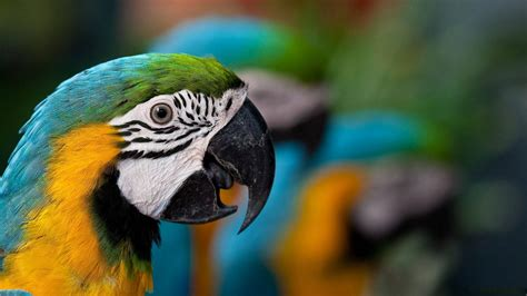 wallpapers macaw bird wallpapers awesome parrot wallpaper 1160871