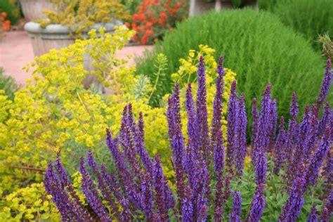 il giardino idroponico piante giardini piante da giardino piante per giardini