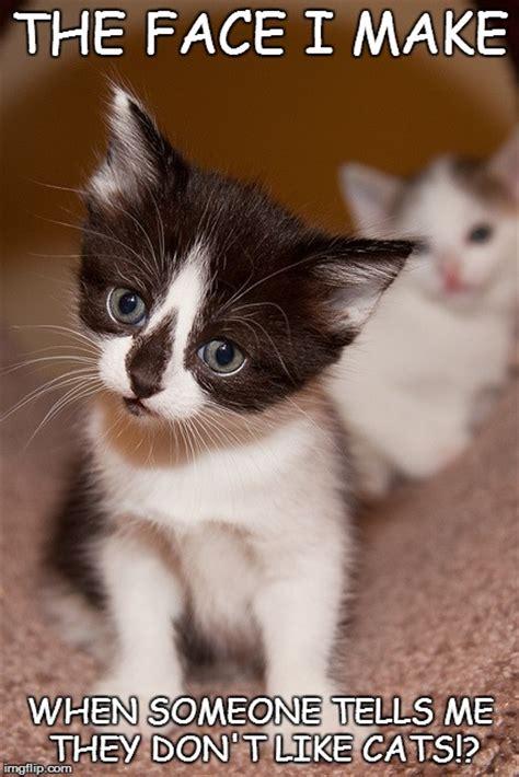 Kitten Meme - 11 cute kitten memes will instantly brighten your day the