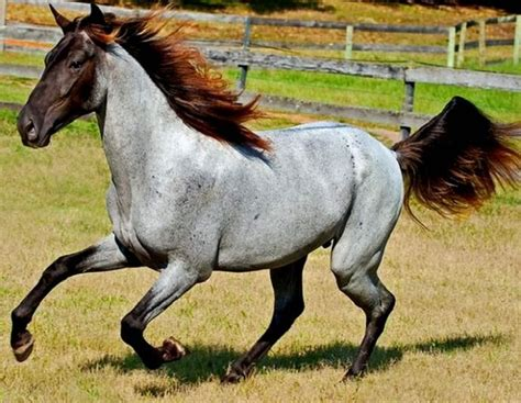color of horses the most gorgeous horses of different colors you ve