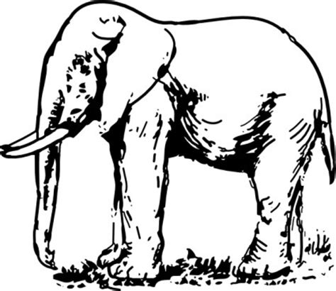 Free Line Drawing Of Animals Download Free Clip Art Free Clip Art On Clipart Library Free Line Drawings Of Animals