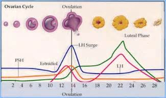 Menstrual Cycle And Ovulation Calendar Menstrual Cycle Pre Post Ovulation Ovulation Calculator