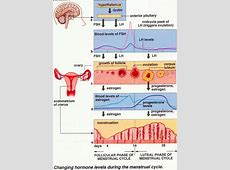 How to Study the Female Sexual Cycle in little TIME!   The ... Female Period Cycle