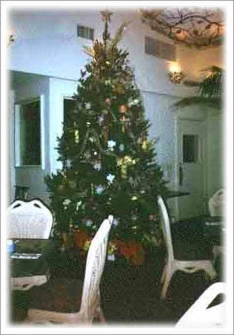 rent live christmas tree san francisco san jose santa cruz