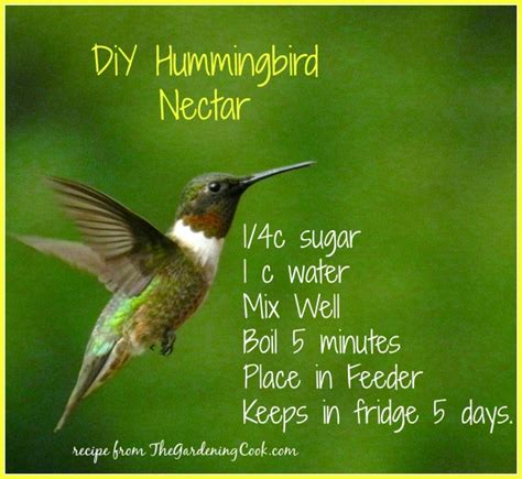 diy humming bird nectar hummingbird