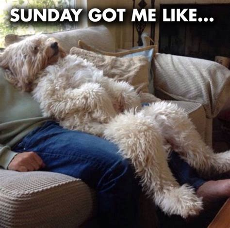 Sunday Meme - funny dog sunday memes