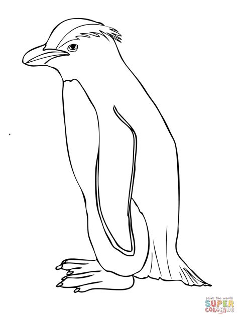 royal penguin coloring page related keywords suggestions for macaroni penguin